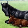 【ダビマス】キタサンブラックかエルコンドルパサーで公式BC用の馬作りたい