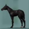 【ダビマス】青毛を生みたい場合セールで青毛牝馬を買うのが一番早いみたい