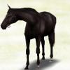 【ダビマス】危険な配合から強い馬も出るのかウマゲノム研究所で試してみた